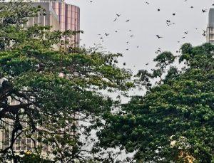 Bats in Abidjan