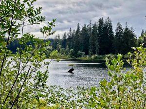 Fairy Lake, Vancouver Island