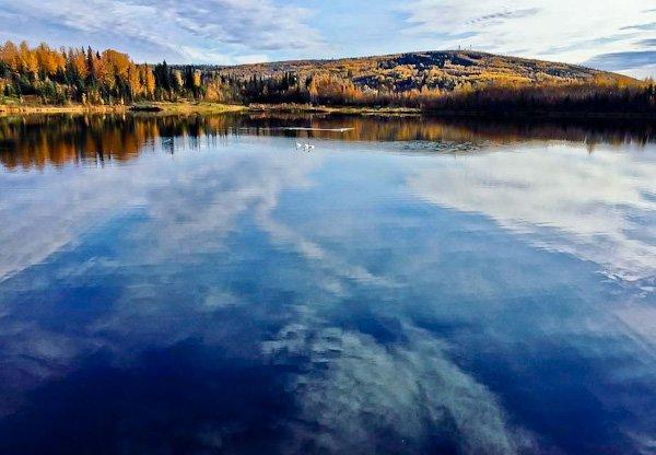 Wedgewood Wildlife Sanctuary - Fairbanks Alaska