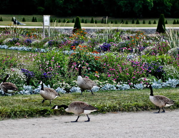 Wildlife in Chateau de Fontainebleau Gardens