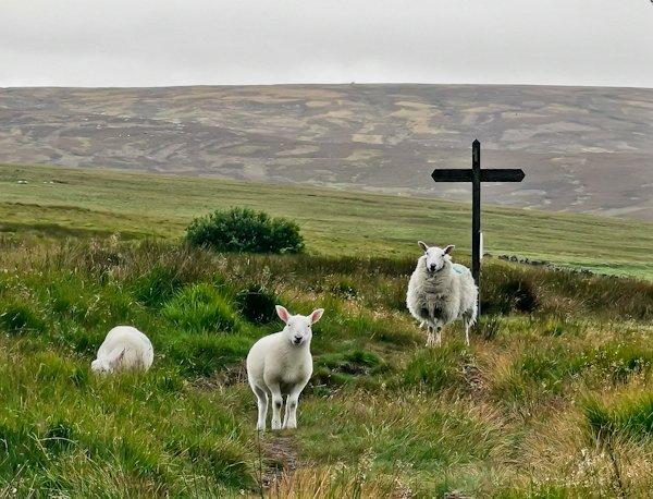 Heptonstall Moor - Pennine Way