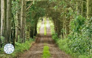 Pennine Way Stage 12 – Alston to Greenhead