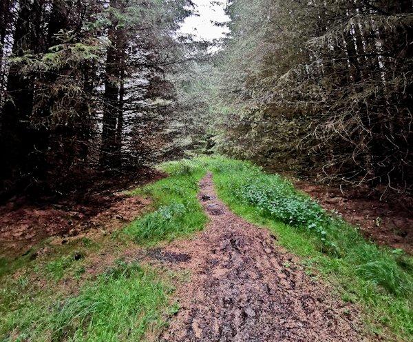 Wark Forest, Pennine Way
