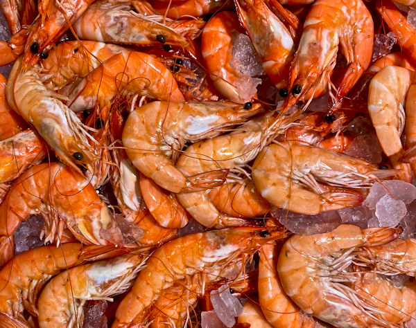 Gastronomy in Riviera Maya