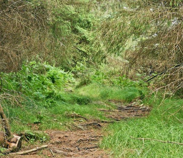 Byrness Village - Pennine Way