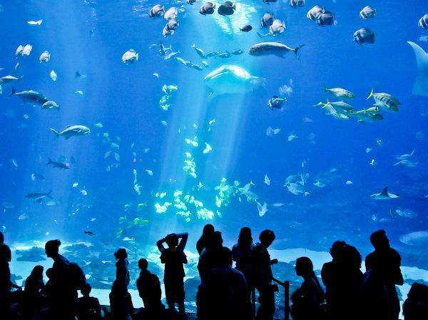 Atlanta Landmarks - Georgia Aquarium