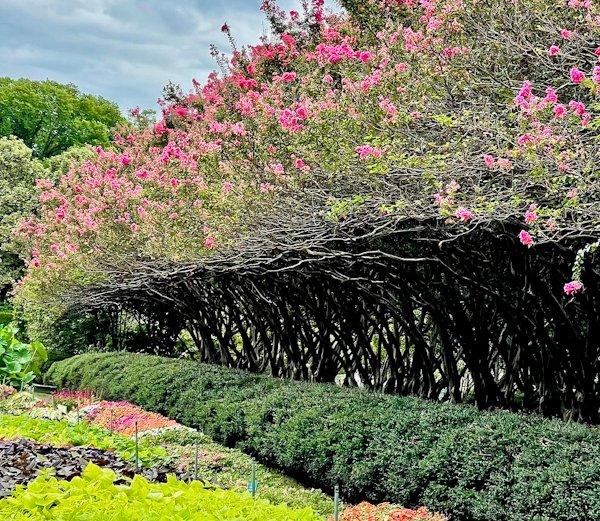 Dallas Arboretum and Botanical Garden