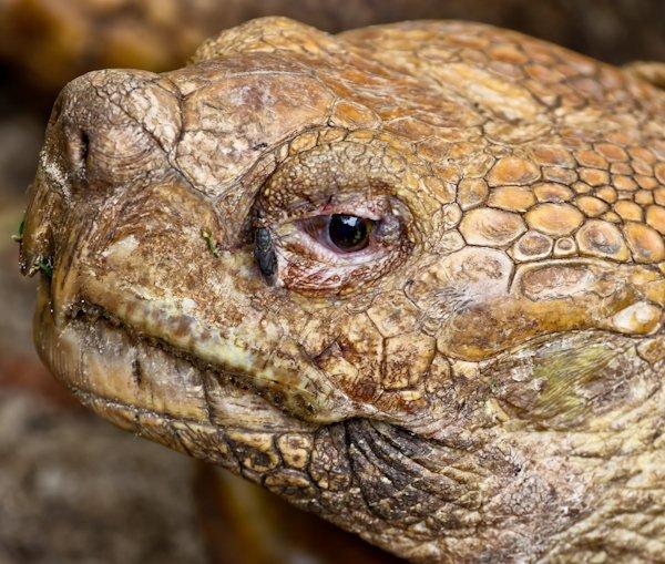 Tortoise, Lekki Conservation Centre