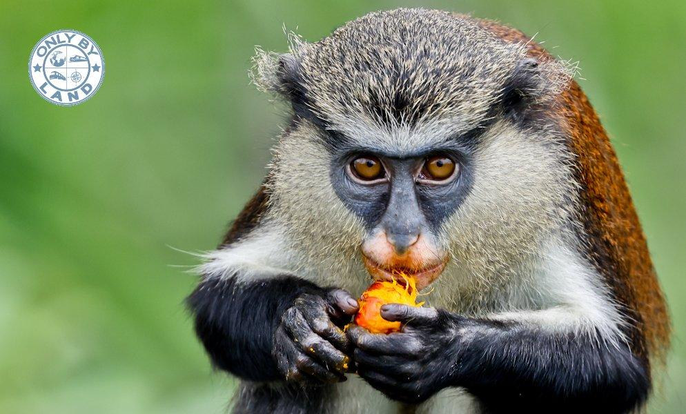 Visit Lekki Conservation Centre + Wildlife Photography